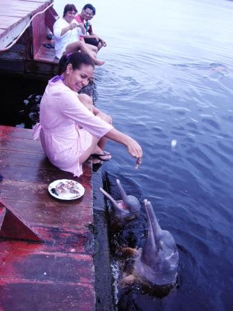 Feeding the Pink Dolphins